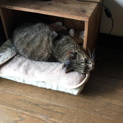人間が入るとそそくさと逃げる完全家庭内野良。ただ、人間がベッドに横たわってるときに限りお腹を触らせてくれる謎の猫。