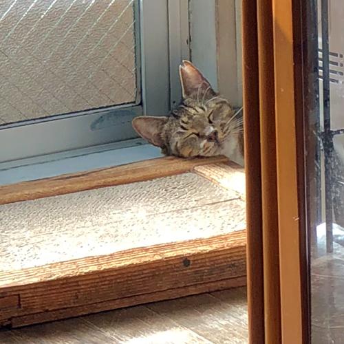 ネコのためのホスピス部屋