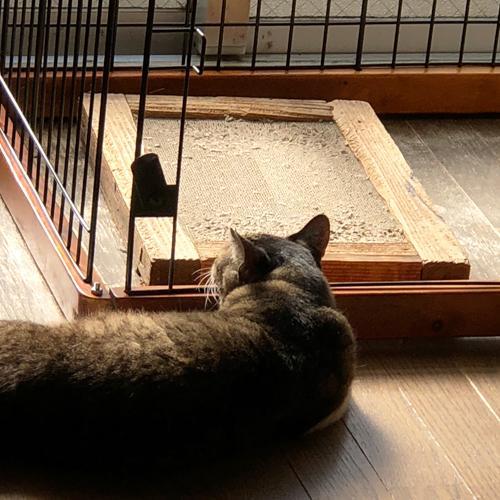 ネコの相部屋作戦
