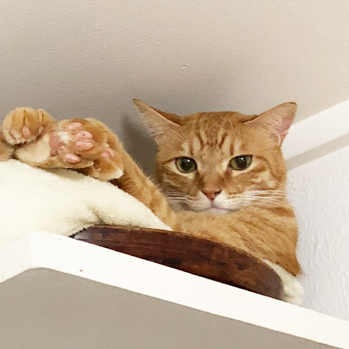 猫風邪ヘルペスをおさらいしたら新型コロナと共通点