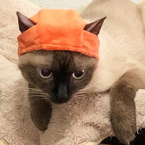 ネコのクビ保護問題