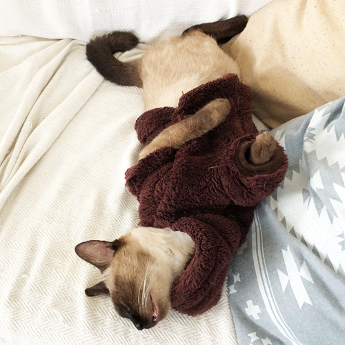 毛布を着たネコ